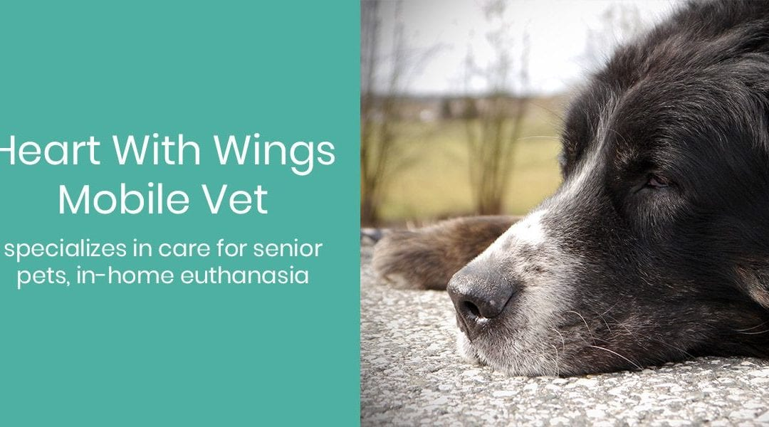 Heart With Wings Mobile Vet Specializes in Care for Senior Pets, In-Home Euthanasia